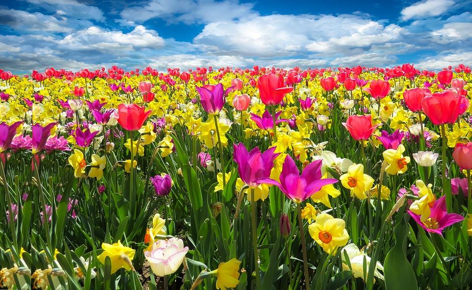 Care sunt proprietatile energetice vindecatoare ale florilor de primavare?